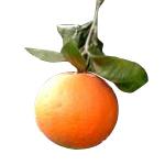 オレンジ ・スイート